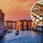 Frittelle di carnevale veneziane – storia e varianti