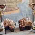 Miglior Colomba di Pasqua italiana 2021: il premio della FIPGC