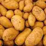 Le patate: i diversi tipi e le migliori da friggere
