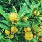 Come condire gli alimenti con il limone