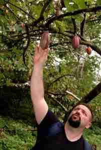 silvio bessone cioccolato pianta cacao
