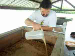 silvio bessone lavorazione cacao