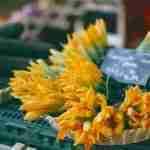 Piatti tipici: fiori di zucca ripieni in pastella