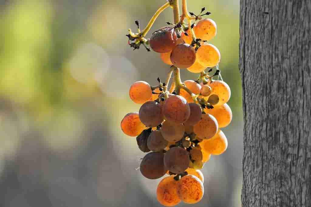fasi-di-produzione-del-vino-cinque-gusti