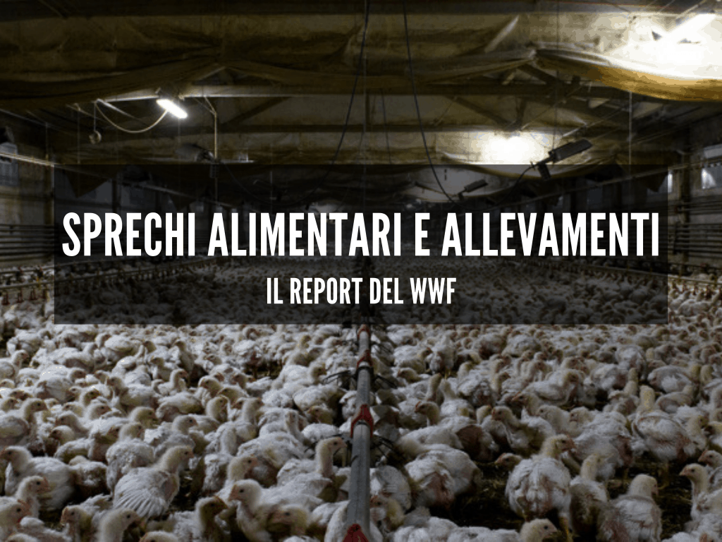sprechi-alimentari-allevamenti-report-wwf-cinque-gusti
